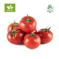 طماطم عضوي - صحن 1 كج