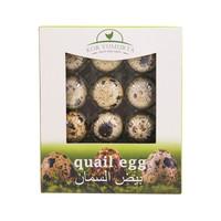 Kor Yumurta Quail Egg x12