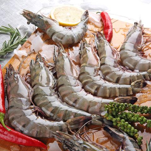 Shrimps-U10-Fresh