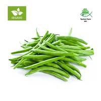 Organic tendergreen beans - tray 500 g
