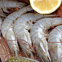 Shrimps 10/20 Fresh