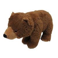 Bear Wild Animals