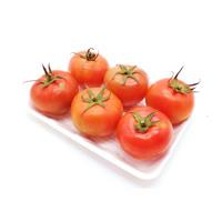 طماطم  صحن 500 جرام