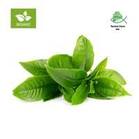 شاي اخضر عضوي - صحن 100 جرام