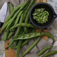 Lebanese Long Green Broad Beans