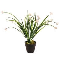 Happy Plant With Pot 34 Cm