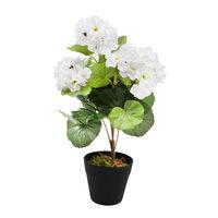 Happy Plant With Pot 33 Cm