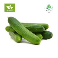 Organic cucumber - tray 1 kg