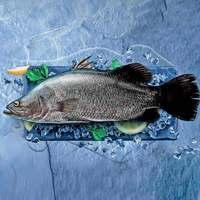 سمك سي باس طازج (للكيلو)