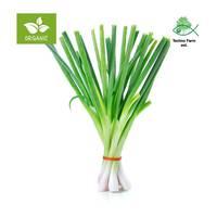 Organic green onion - bag 100 g