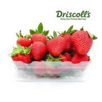 فراولة  مستورد - علبة 500 جرام