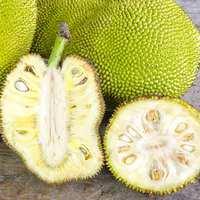 Tender Jackfruit