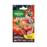Vilmorin Tomato Buffalo Steak 766