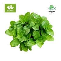 Organic mint - tray 100 g