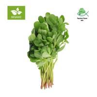 Organic rejlah - tray 100 g